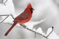 2011_11_23_cardinal