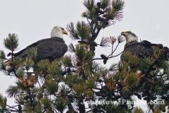 2011_12_6_eagles-1