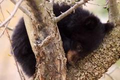 bear_t_4_19_10-1