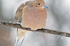 2012_01_31_dove