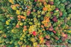 Fall Bouquet 2020
