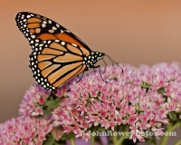 2011_09_2011_butterfly