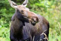 2010_08_10_moose