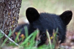bear_cub_g_4_19_10